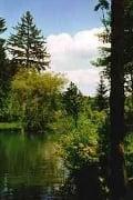 Friedwald Naturbestattungen