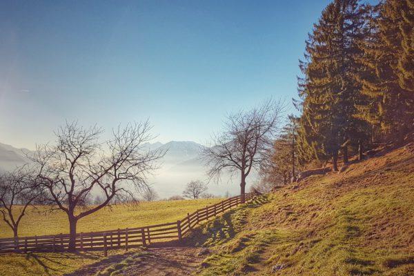 Almwiesen und Wälder...