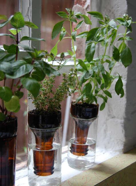 Selbstbewässerungsanlage aus Plastikflaschen // Urban gardening
