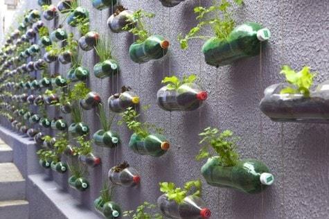 Upcycling-Plastic-Soda-Bottles-As-An-Urban-Garden-1