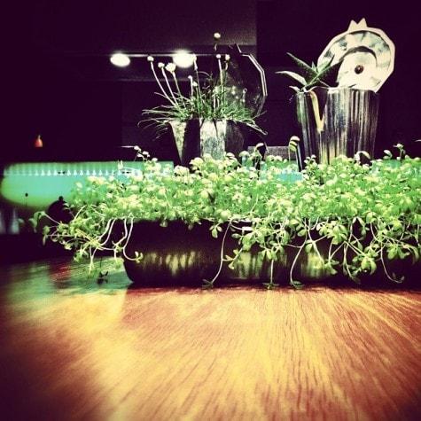 Upcycling // Pfanne und Kanne als Blumentopf