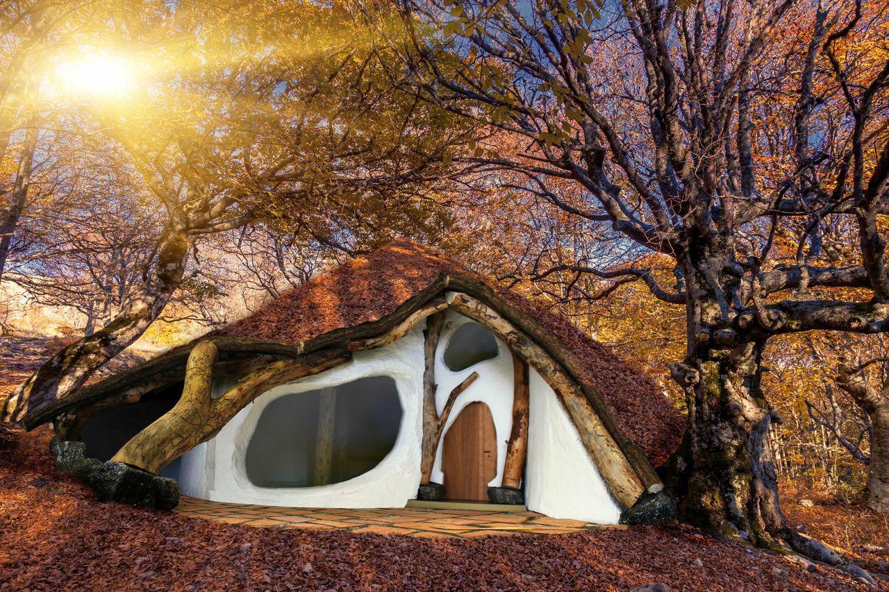 Das einbaumhaus ein haus aus einem baum for Billig wohnen